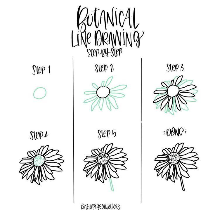 Botanical Flower Line Drawing : Best simple line drawings ideas on pinterest
