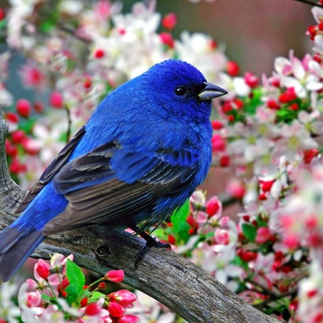 Beautiful blue bird...