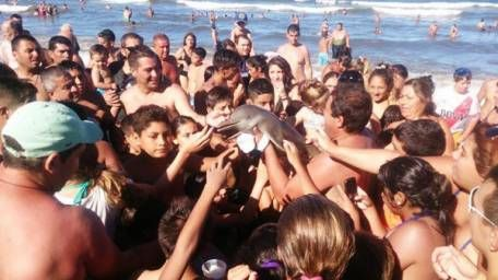 Baby dolphin dies after tourists yank it out of ocean for selfies
