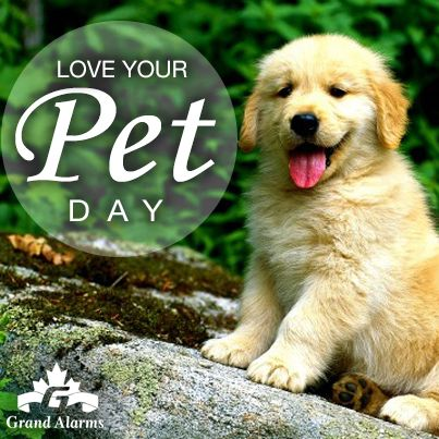 It's Love Your Pet Day! Today is the official day for pampering your pet with a little extra love and affection to show them just how much you care.