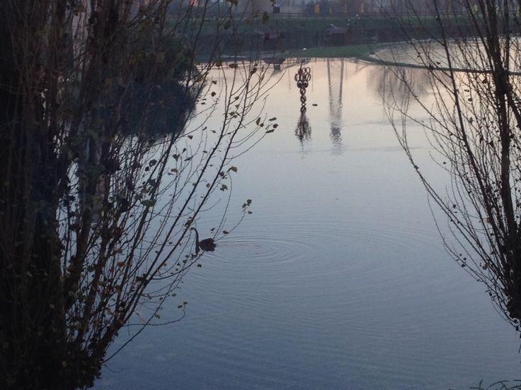 #evento con alba e cigno! Piacenza 10 dicembre. Mi piace!