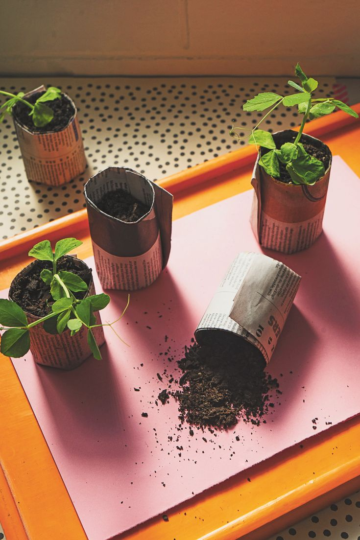 DIY seedling pots, featured in Lunch Lady Issue Four. Lunch Lady Magazine available at http://shop.hellolunchlady.com.au/