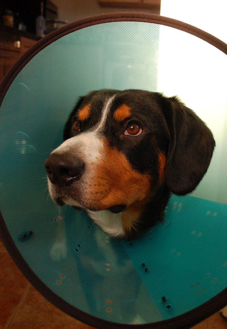 5 Comfy Alternatives to The Dreaded Cone of Shame - Plus Review of the Inflatable Dog Collar