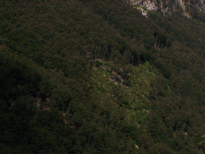 szerelmes erdész Szlovéniában