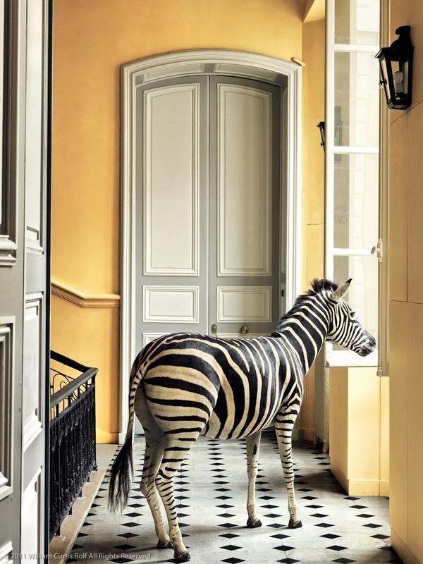 © William Curtis Rolf 2011 Deyrolle, Paris