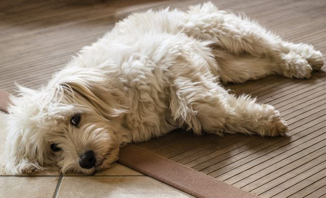 Dogs are loyal and loving members of the family, but they are also the smelliest. Due to dirt, body odor, sweat and their bodily functions, dogs are prone to smelling bad. When...