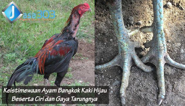 Foto Ayam Siam Super Keistimewaan Ayam Bangkok Kaki Hijau Beserta Ciri Dan Gaya