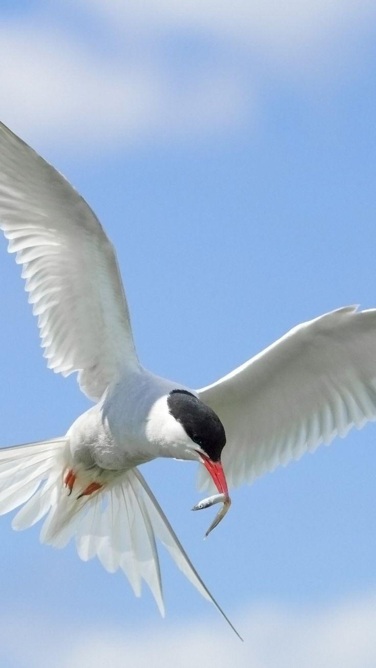 birds, flying, sky, wings, flap