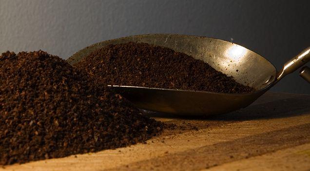 engrais marc de caf surtout riche en azote
