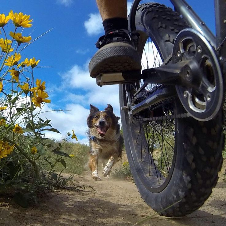 Tula excited to be hitting the trail at Dog Town, Santa Fe, NM.