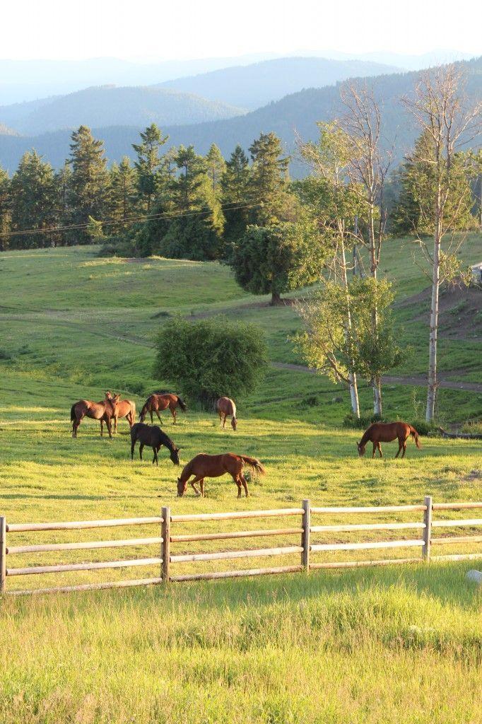 Bull Hill Guest Ranch  Kettle Falls, Washington horse ranch life