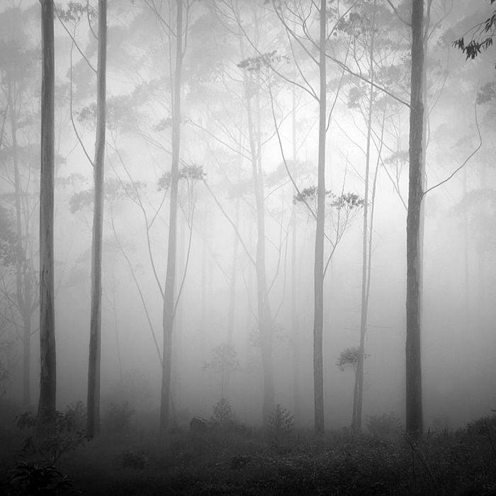 Silence  by Hengki Koentjoro, via 500px: Natural Photography, White Photography, Black And White, Hengki Koentjoro, Photography Black, Foggy Photography, Photography Studios, Caffeine Photographers, Photography Ideas