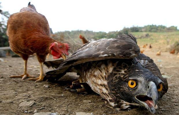 """""""Ξέρεις, Ανθρωπάκο, πως θα ένιωθε ένας αητός άμα έκλωθε αυγά μιας κότας; Αρχικά…"""