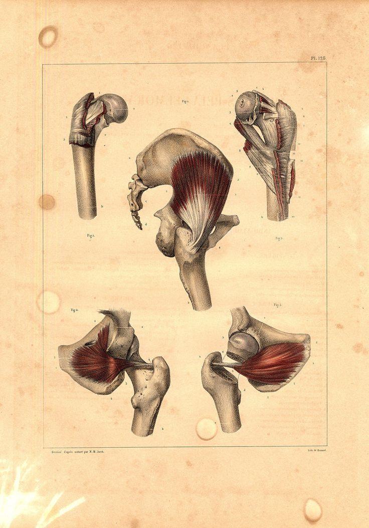 419 besten anatomia Bilder auf Pinterest | Menschliche anatomie ...