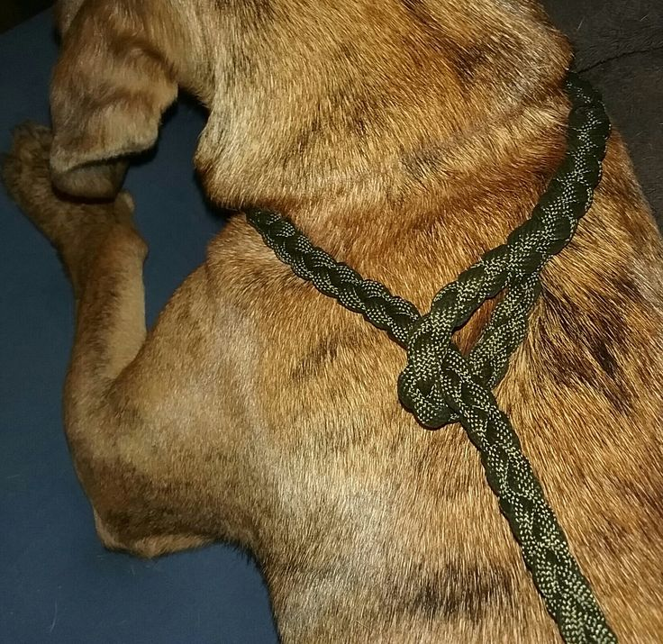 Olive Drab no metal training leash. Excellent for walking and training your dog.  It's a four strand weave with 550 paracord so it is strong enough for any type of large dog   Length 5ft   Ships on same day or the following business day if purchased on Sunday | Shop this product here: http://spreesy.com/emporium/10 | Shop all of our products at http://spreesy.com/emporium    | Pinterest selling powered by Spreesy.com