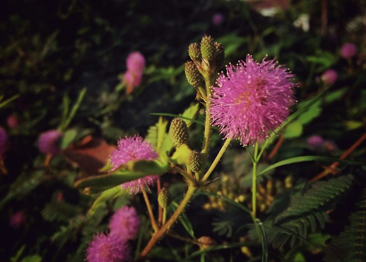 Pink Phonegraphy Oppo a37 Taken by wahyu sri hastomo