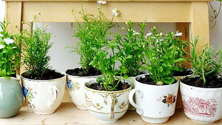 Csináld magad: készíts virágoskertet a bögrédből  http://www.nlcafe.hu/otthon/20150310/diy-hogyan-keszits-viragoskertet-a-bogredbol/