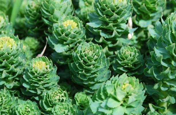 Energy Boost; Rhodiola    Why It Works: Rhodiola, one of nature's best energy builders, helps multiply your energy molecules, giving you a boost throughout the day.    How to Use It: Start with 100 mg every day to keep your energy up. If you're still in a slump, try 200 mg a day. The supplement is available in most health-food stores.