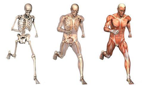 Cirurgia do joelho e Ortopedia Esportiva  tratamento de doenças ortopédicas como lombalgia, condromalacia exercícios físicos específicos e programados Cirurgia de Joelho prótese de joelho reconstrução do ligamento cruzado anterior e posterior artroscopia para lesoes de menisco Tratatamento de condropatias exercícios suplementações