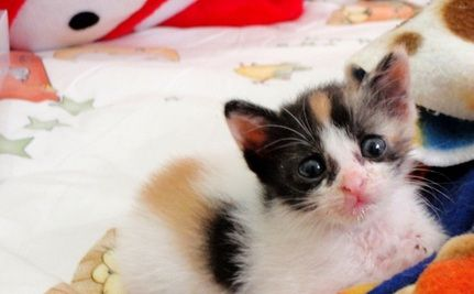 Hero Runs 30 Minutes Against Traffic to Save Kitten at Bus Stop