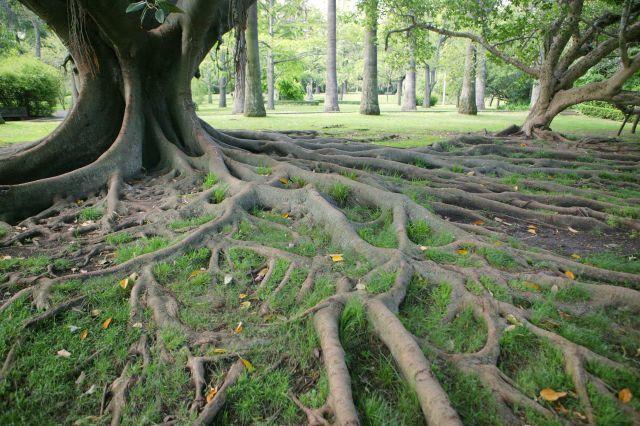 Uma visita ao Jardim Botânico Tropical