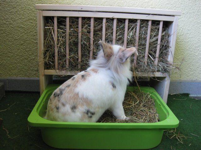 28 Best Kaninting Images On Pinterest Rabbit Bunnies