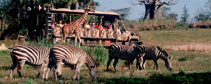 Kilimanjaro Safari - Disney's Animal Kingdom for Adults