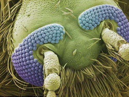 #Комар под #микроскопом #биология #удивительно #ужасно и #красиво