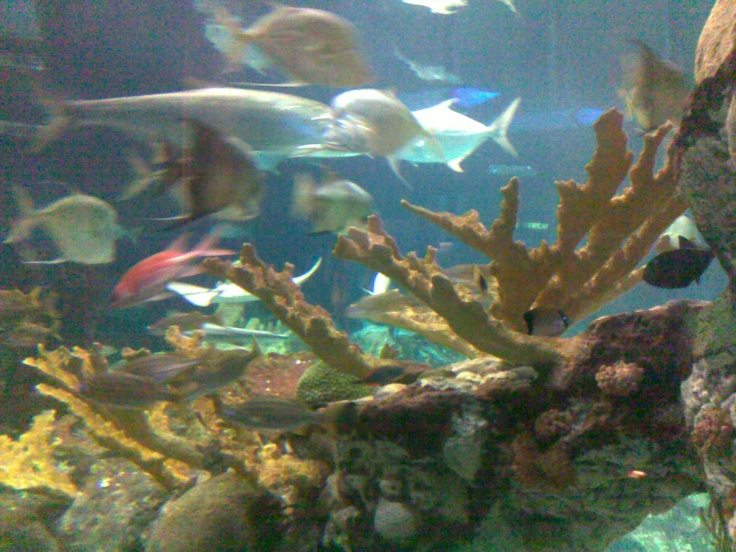 Jazz at the Chicago Shedd Aquarium - Experience the exotic sights & sounds with friends!