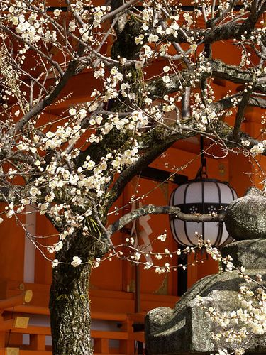 flowering tree in Japanese garden