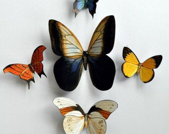 Butterfly Magnets Insects Set Of 5 Refrigerator Magnets Kitchen Decor Handmade