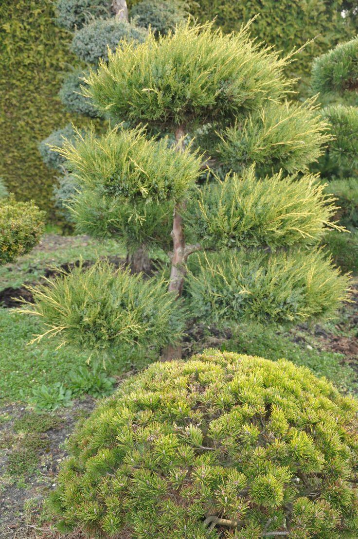 Trend BONSAI PARK tree shrub plant the most beautiful Japanese Garden