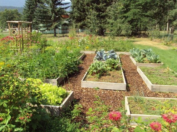 7 best Gardening images on Pinterest | Box garden, Boxing and Tomato ...