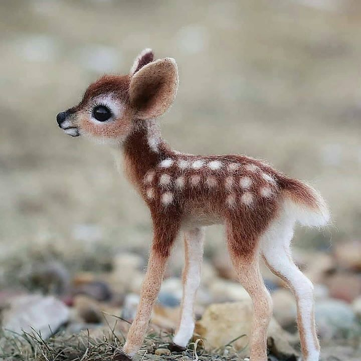 Fun Trivia Questions Quizzes And Personality Tests In 2020 Cute Little Animals Baby Animals Funny Baby Animals Super Cute