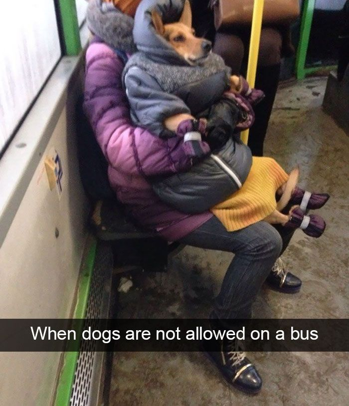 166 Hilarious Dog Snapchats That Are 700