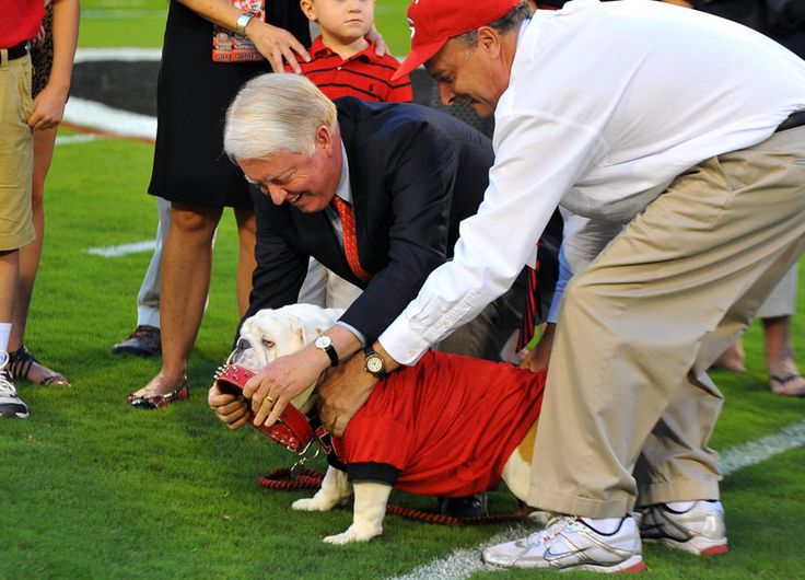 "UGA President Michael Adams ""collars"" Russ the bulldog, officially inaugurating the dog as Uga IX shortly before Saturday night's kickoff against Florida Atlantic. (AJC photo by Brant Sanderlin, taken on September 15, 2012)"