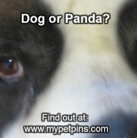 Is This a Dog or a Panda?