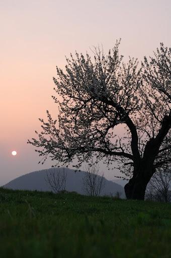 Colli Euganei - Padua _Italy