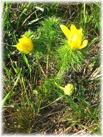 KOČKY SOBĚ: Být znamená být vnímán - na jaře, v létě prostě kd...