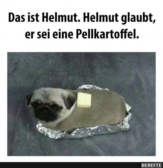 Das ist Helmut. Helmut glaubt, er sei eine Pellkartoffel..   Lustige Bilder, Sprüche, Witze, echt lustig
