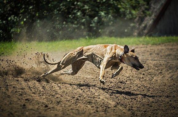 Easy Dogs / Des Pudels Kern, Dr. Stephan Gronostay