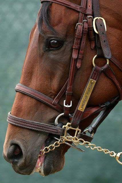 Lexington Beauty | American Pharoah | Triple Crown Winner
