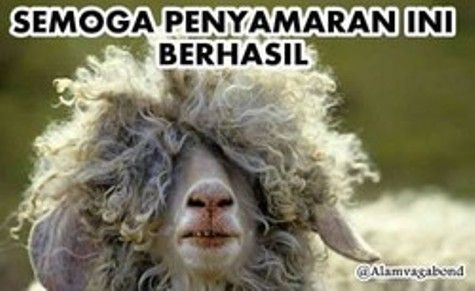 Brilio.net | 17 Meme kocak curhatan kambing jelang hari eksekusi