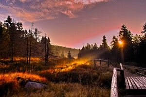 Nationalpark Harz: Goetheweg ©Tourismus Marketing Niedersachsen, Christian…