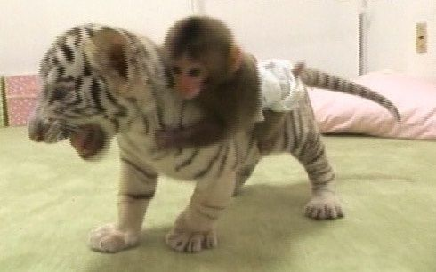 Image result for riding tiger