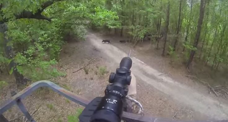Guy Goes GoPro Hog Hunting in Stand, Hops Down to Finish the Job [VIDEO]