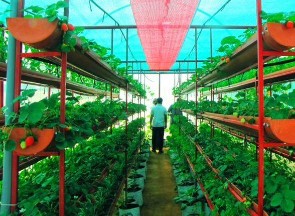Agriculture university's one-cent poly house a hit