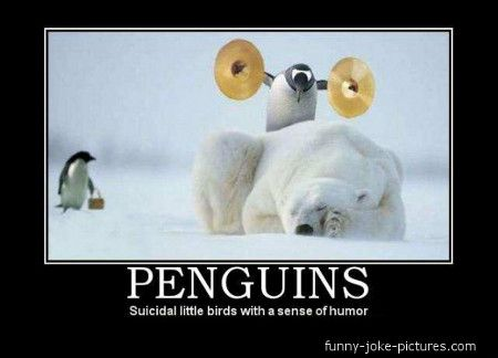funny memes with clean humor | Funny Penguin Meme Joke Picture - Suicidal little birds with a sense ...