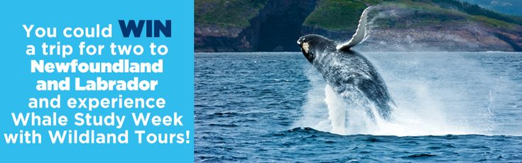 You could #WIN a trip for 2 to Glorious Newfoundland
