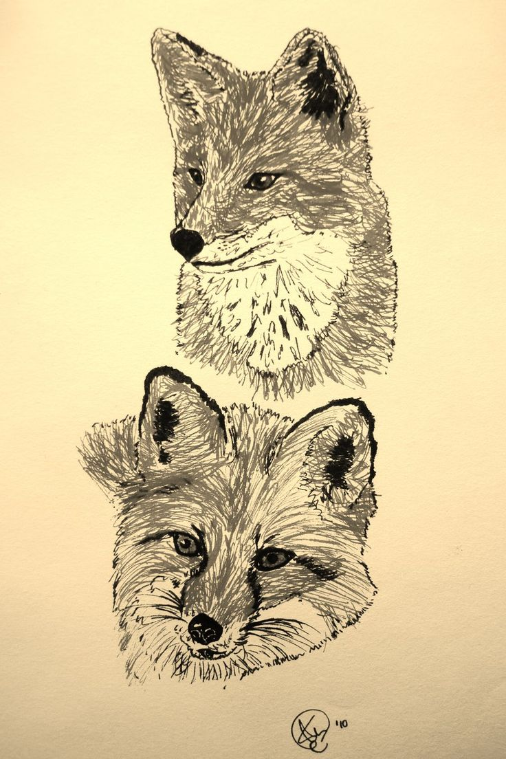 522 best images about GRAPHITE PENCIL DRAWINGS OF FOX on ...
